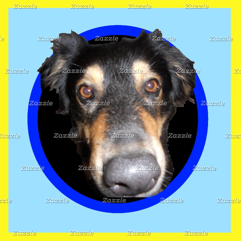 Dogs: English Shepherds