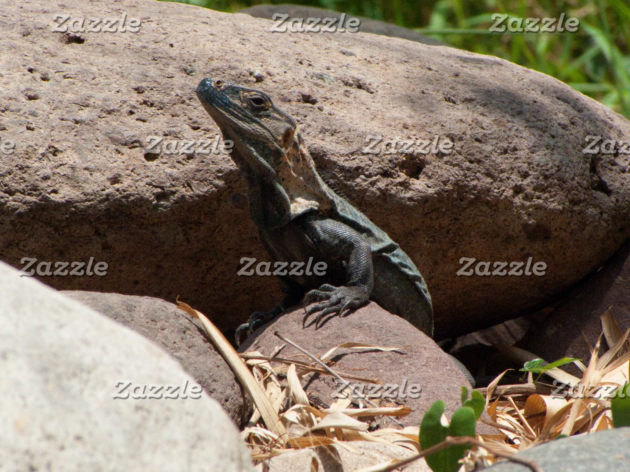 Wildlife-Mexican Critters