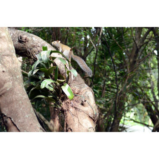 air plant in tree with squirrel hiding