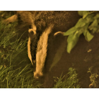 For the Love Of Badgers & Wildlife .