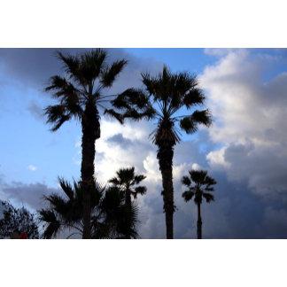 Blue Sky and Palm Trees