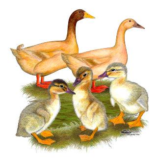 Buff Orpington Duck Family