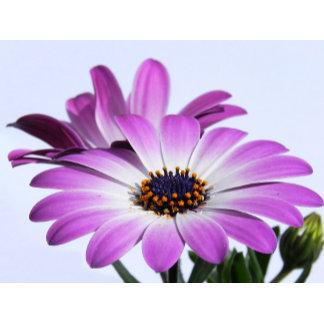 ♡ flowers & plants