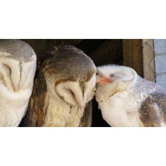 Owl kisses