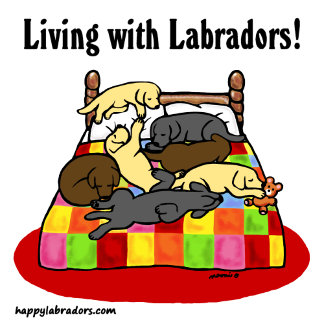 Living with Labradors