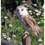 barn-owl-13623204665Iu.jpg