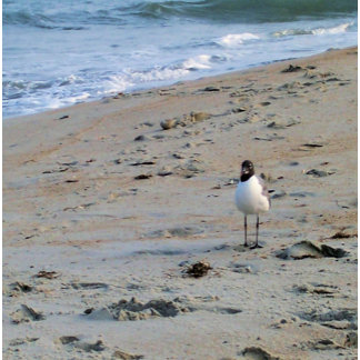 Seagull On Beach Ocean Picture