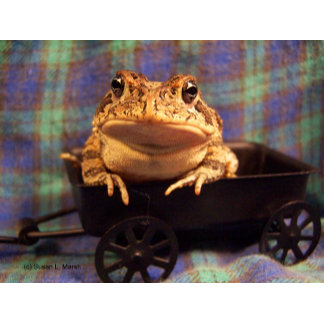 Frog toad in black wagon blue plaid back photo pic