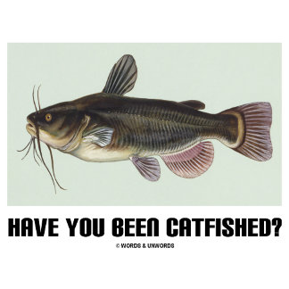 Have You Been Catfished? (Catfish Illustration)