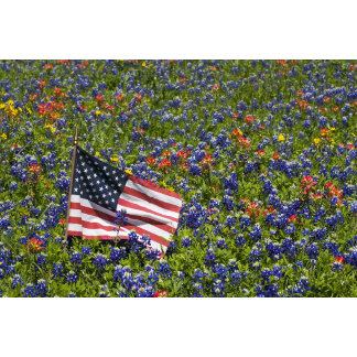 American Flag in field of Blue Bonnets,