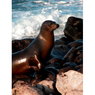 Sea lion and surf George W. Ritchey