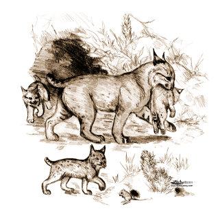 Bobcat Family