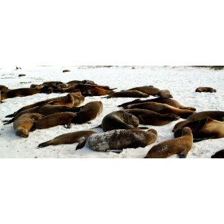 Sea lions on beach George W. Ritchey
