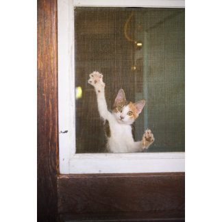 """Cat Hanging on Wire Screen Photo Poster Print"""