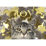 star kitten.png