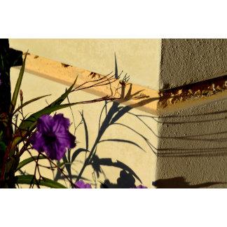 flower shadow on post purple mexican petunia