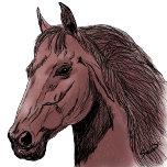 Dibujo caballo color.png