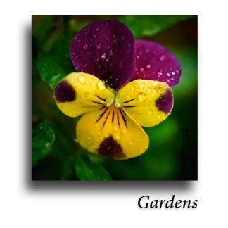 Flowers & Floral Art
