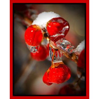 Viburnum Berries Covered with Ice