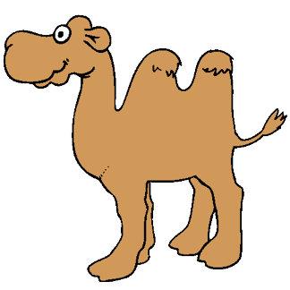 Camels Tshirts and Presents
