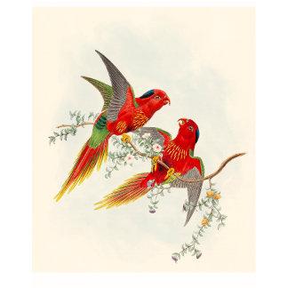 Goulds Lorikeet Birds
