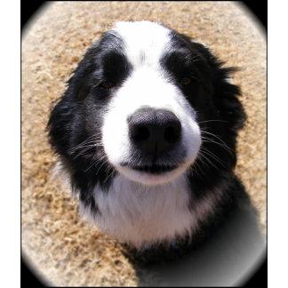 Customizable Dog Noses