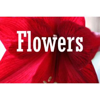 FLOWERS & VALENTINES