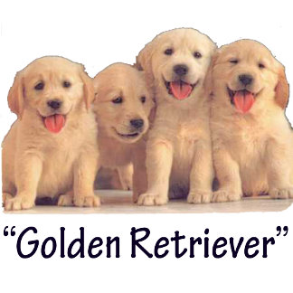 Golden Retreiver