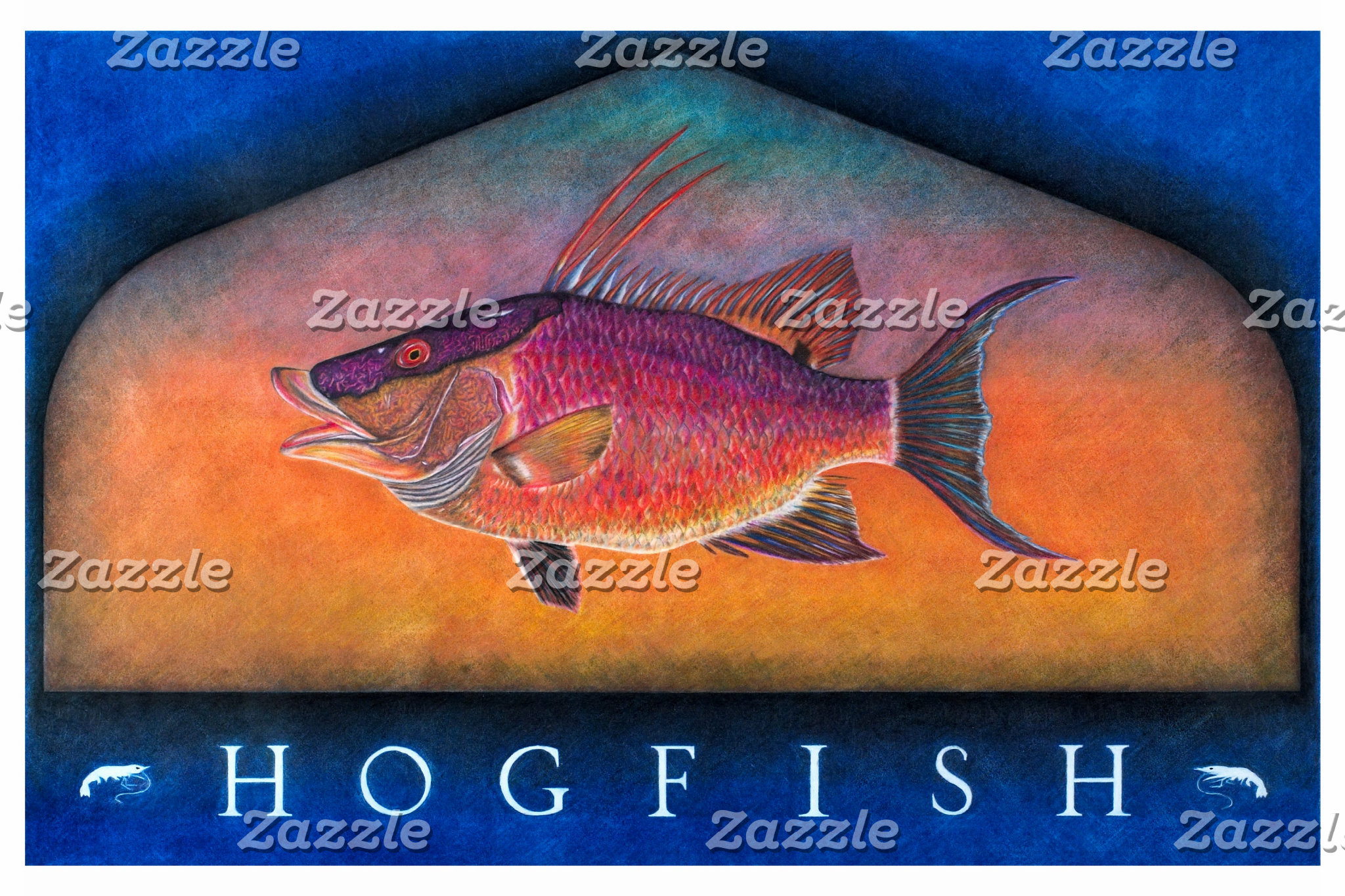 Hogfish Original
