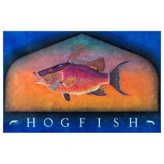 Hogfish Original