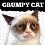 Official Grumpy Cat Merchandise on Zazzle