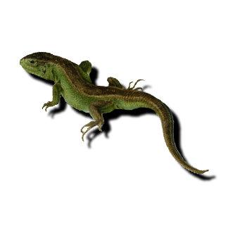 Chameleons *25 items,