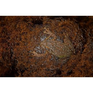 frog on moss embossed look
