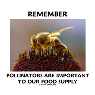Remember Pollinators Are Important To Food Supply