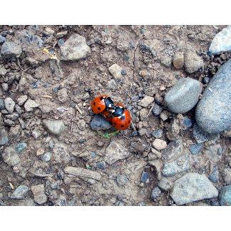 Ladybug Kisses