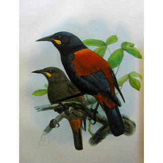 BIRDLAND-LORDS OF THE SKIES