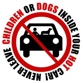 Hot Car Pet Safety