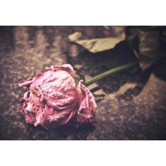 Old Vintage Rose