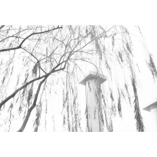 Column Under Weeping Tree High Dynamic range