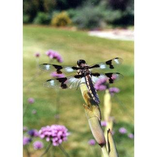 Dragonfly Diane Gelormino