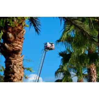 fire truck ladder against sky framed palm trees