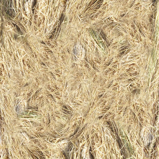 Straw / Hay Background