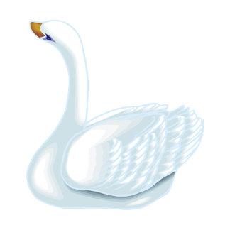 Swookie Swan