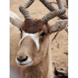 Antelop in Wildpark
