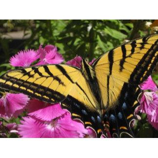 Butterflies, Bugs, & Bees