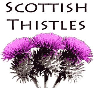 Scottish Thistles