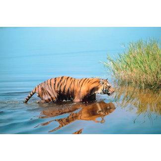 Tiger River Walk