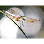 dragonfly-cal-m1.jpg