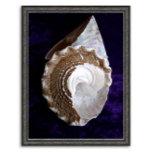 zaz Shells Poster framed.jpg