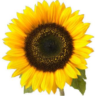 Sunflower 171 Items,